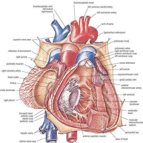 magnesium bij hartproblemen